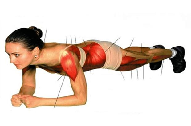 1-plank-muscles