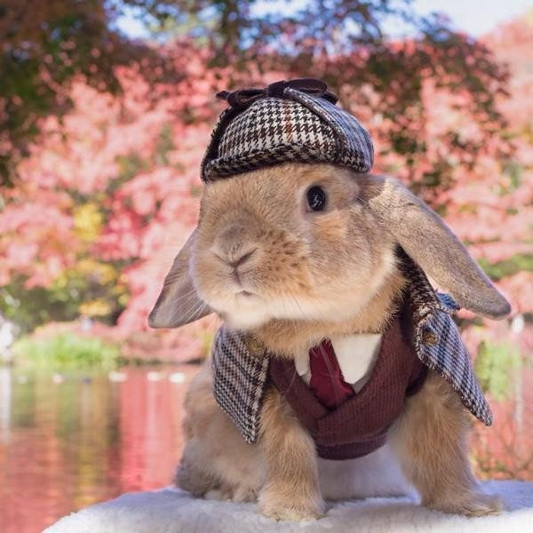 worlds-most-stylish-bunny-puipui-10-571f6584060e9__700 (Copy)
