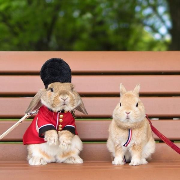 worlds-most-stylish-bunny-puipui-28-571f65a988a4f__700 (Copy)