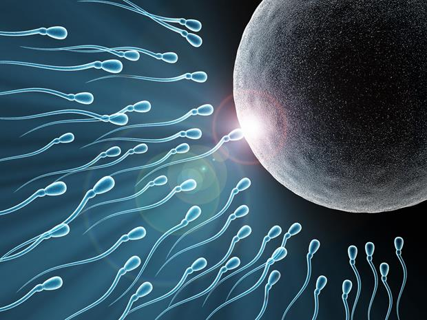 egg-and-sperm