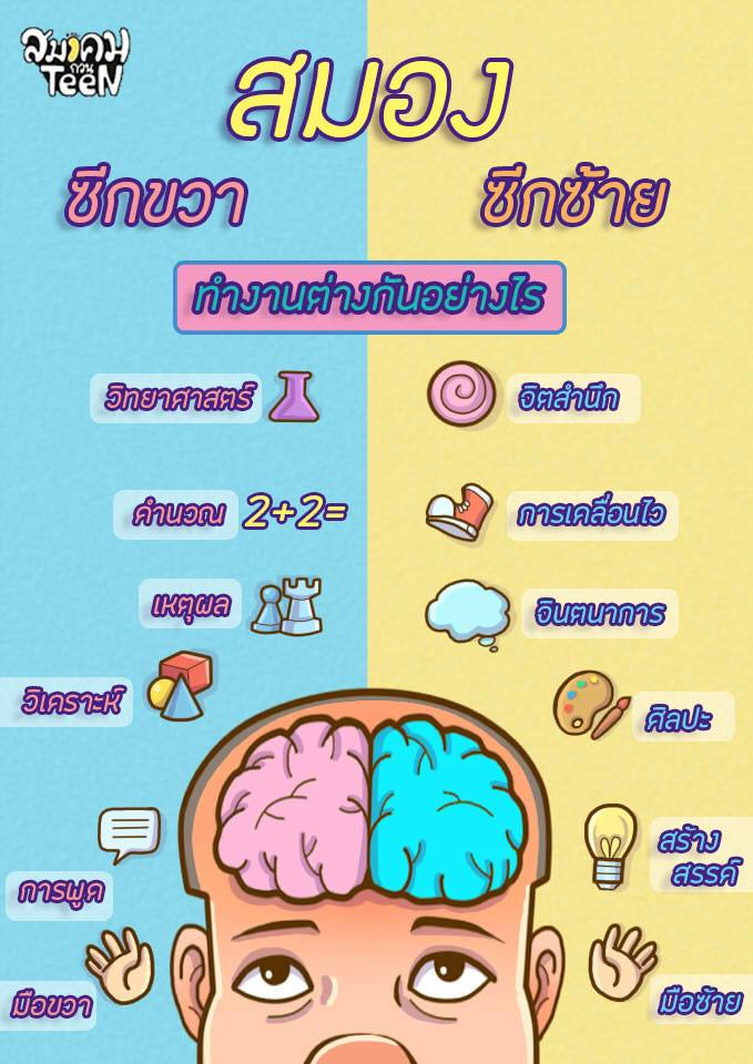 หน้าที่ส่วนต่าง ๆ ของสมอง
